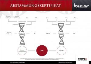 DNA-Analyse