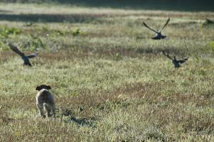 10_auf-der-Jagd