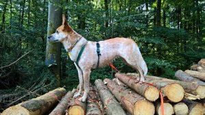 Waldsport_2