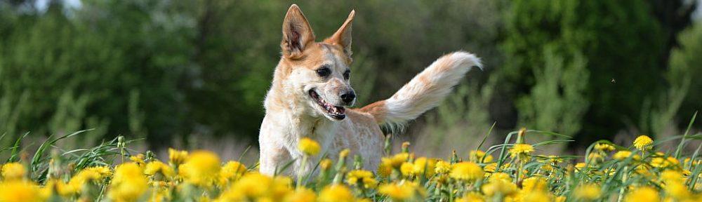 der Hundesommer